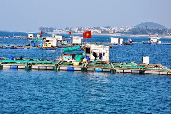 Lồng bè nuôi tôm hùm xuất khẩu ở vùng biển gần bờ huyện đảo Lý Sơn.