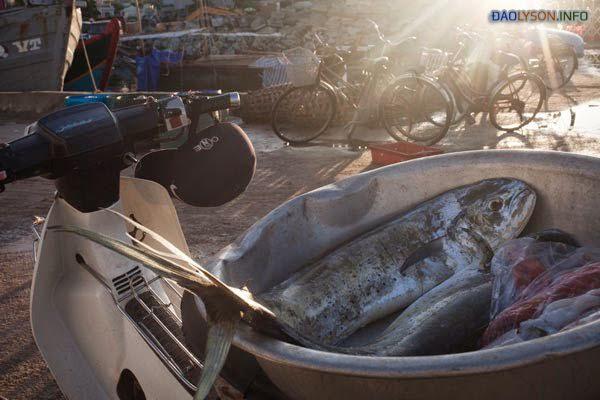 Bán cá tại các bến cảng của đảo Lý Sơn