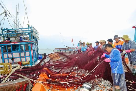"""Cứ bình quân 15 tấn hải sản, ngư dân lại bị """"trừ hao"""" trọng lượng và chỉ được trả tiền 10 tấn hải sản."""