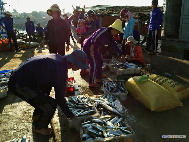 Cá được chuyển lên bờ và mang đến chợ bán cho người dân.