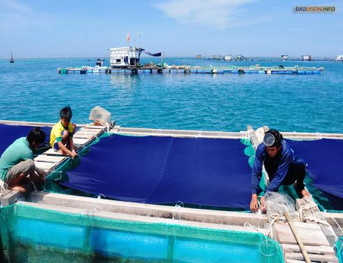 Dân Lý Sơn ồ ạt đầu tư tiền tỷ nuôi thủy sản