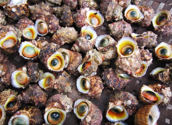 Ốc xà cừ - một đặc sản của huyện đảo Lý Sơn, Quảng Ngãi