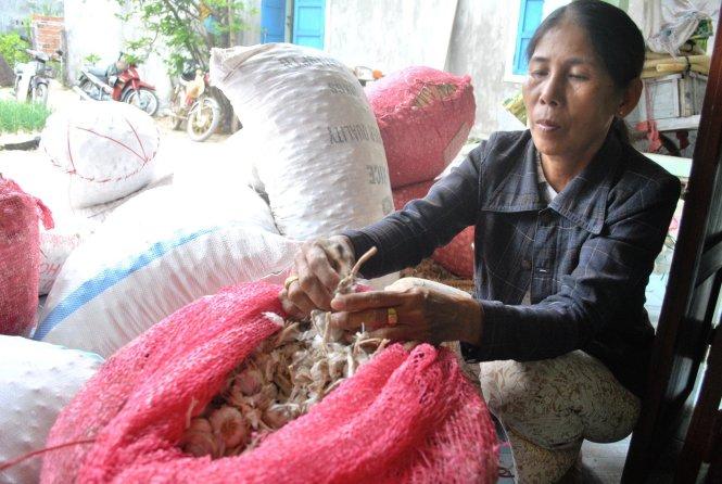 Tỏi Lý Sơn được người dân đất đảo mang sản phẩm thô về nhà