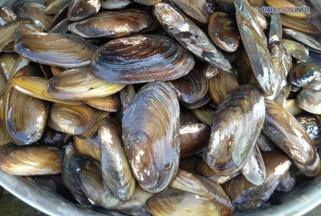 Gỏi tỏi, cua dẹt và hàu son - những món ăn lạ miệng trên đảo Lý Sơn