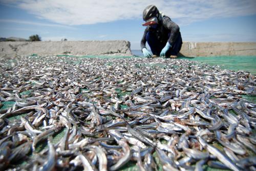 Lý Sơn: Dân không đồng tình nội dung dự án đường vào cảng cá
