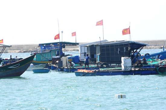 Hàng chục bè nuôi tôm hùm chen chúc trước cửa biển dẫn vào khu neo trú tàu thuyền.