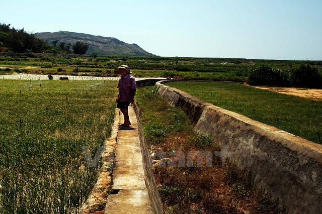 Con kênh này đã không còn nước để phục vụ tưới tiêu cho các ruộng tỏi