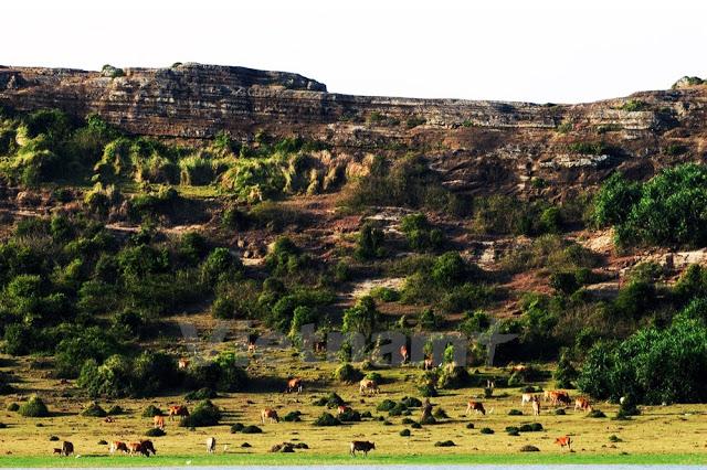 Trước đây khi hồ đầy nước, trâu bò không thể xuống tận dưới lòng hồ để ăn cỏ.