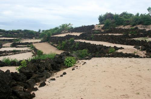 Độc nhất Lý Sơn: Ruộng bậc thang đá giữa trùng khơi - Hình 2