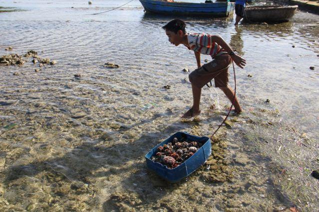 Đảo Lý Sơn - Thợ lặn nhí trổ tài trên biển - Hình 5