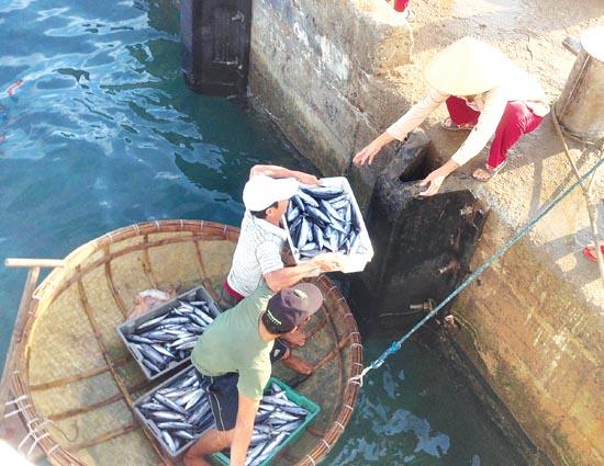 Ngư dân Lý Sơn đưa cá vào bờ sau một đêm đánh bắt.