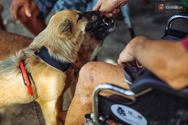 Đối với anh Huệ, những chú chó là người bạn thân thiết giúp anh có thêm nghị lực sống dù tật nguyền.
