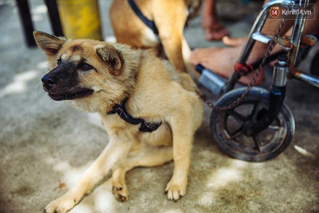 """Chú chó này được anh đặt tên là Út. Anh cho biết ban đầu """"đội quân kéo xe"""" chỉ có 2 con nhưng dần dà, chúng sinh thêm 2, 3 chú chó con, rồi anh huấn luyện từ nhỏ đến lớn nên con nào cũng biết kéo xe."""