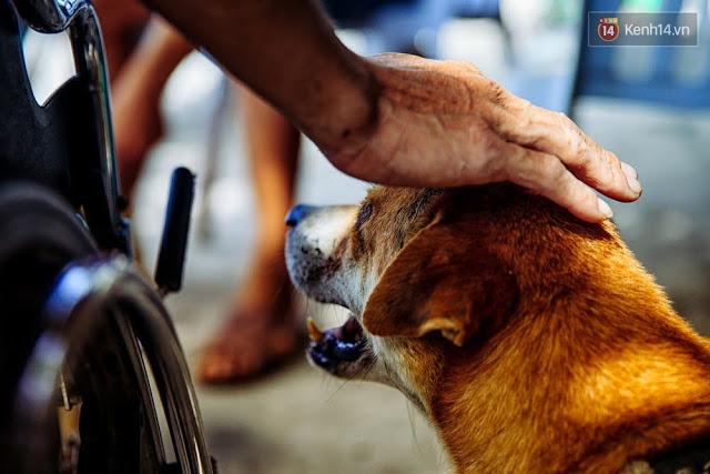 Cứ thế, hơn 10 năm nay, hình ảnh những chú chó cần mẫn kéo chiếc xe lăn đã cũ mỗi chiều qua dốc Đụn đã trở thành hình ảnh quen thuộc với những người dân nơi đây.