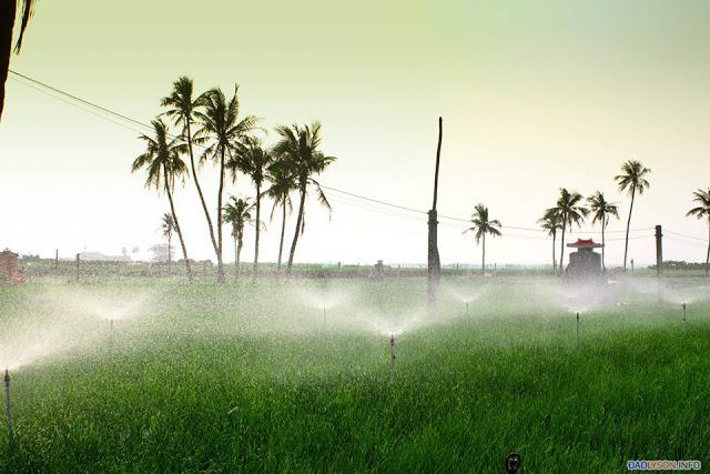 Nông dân Lý Sơn tiết kiệm được chi phí nhờ đưa điện ra đồng