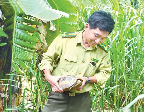 Cá thể rùa Trung Bộ được tìm thấy tại xã Bình Khương.
