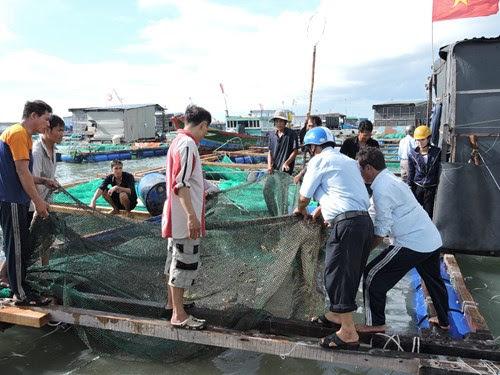 Đảo Lý Sơn bị thiệt hại nhiều tỷ đồng sau bão số 3 - Hình 3