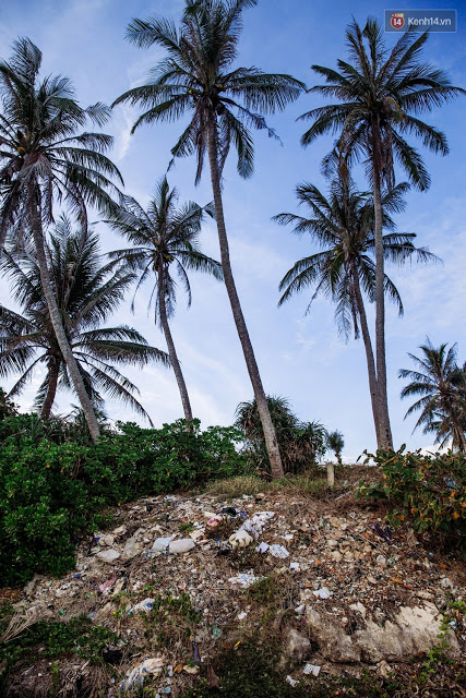 """Bên dưới những gốc dừa cũng là địa điểm """"tập kết rác""""."""