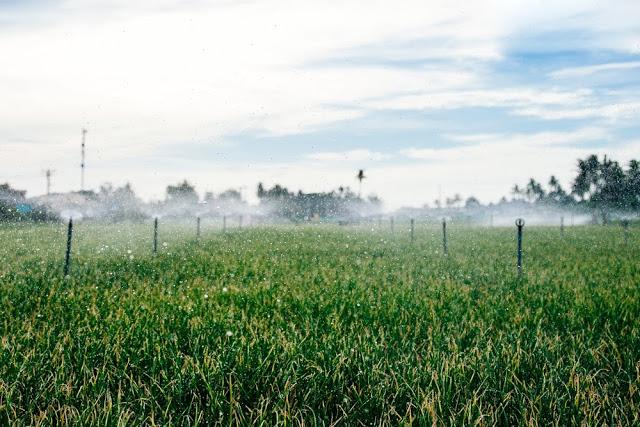 Từ khi có điện, hàng loạt hộ dân đầu tư hệ thống tưới tiêu tự động trên các ruộng tỏi, hành của họ.