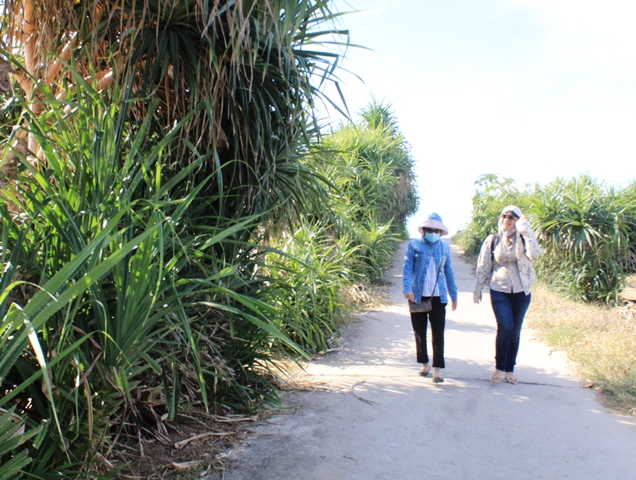 Cây dứa dại mọc mọc khắp các con đường ở đảo Bé với vẻ đẹp bình yên.