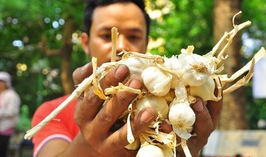 Tỏi Lý Sơn đang được tiêu thụ khá tốt ở Hà Nội