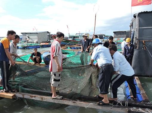 Lý Sơn: Đẩy mạnh bảo vệ nguồn lợi thuỷ sản ven bờ - Hình 1