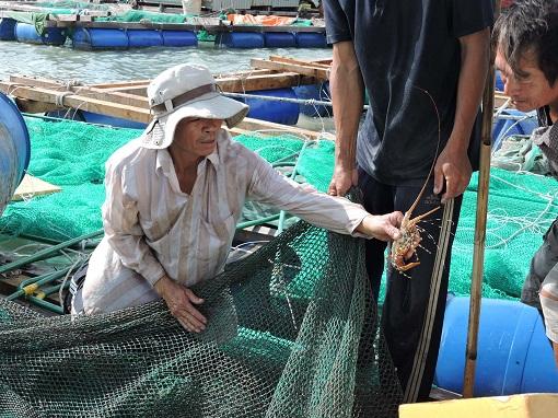 Lý Sơn: Đẩy mạnh bảo vệ nguồn lợi thuỷ sản ven bờ - Hình 2