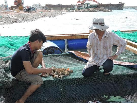 Người nuôi tôm đứng trước nguy cơ trắng tay vì tôm hùm chết hàng loạt chưa rõ nguyên nhân.