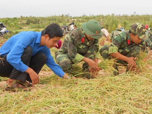 Nông dân Lý Sơn: Hành thu đông được mùa, được giá - Hình 2