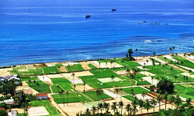 Cánh đồng hành tỏi ở Lý Sơn hiện lên màu xanh tươi mát giữa bạt ngàn cát trắng xóa.