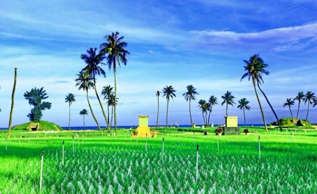 Cánh đồng tỏi xanh mướt mang sự sống đến cho vùng đất khô cằn nơi đảo xa.