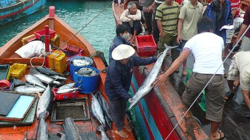 Lý Sơn: Phát huy thế mạnh kinh tế biển - Hình 2