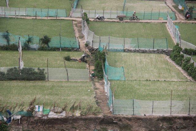 Đầu tư hàng triệu đồng để mua lưới chắn cho ruộng tỏi Lý Sơn
