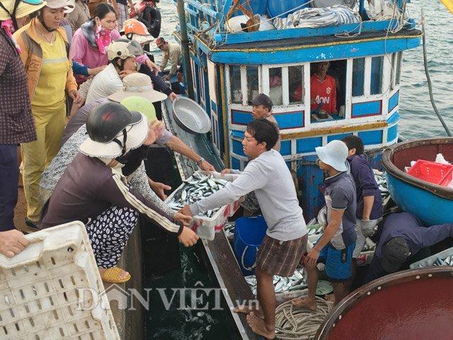 Hối hả đưa cá từ tàu lên bờ