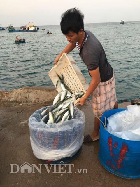 Cá được cho vào thùng nhựa để vận chuyển vào đất liền bán