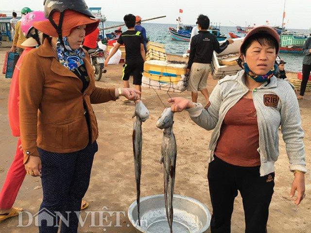 Hải sản ngư dân đưa về bán khá phong phú, với đủ loại mực, cá
