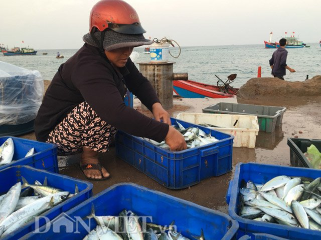 Hải sản ngư dân đưa về bán khá phong phú, với đủ loại mực, cá - Hình 4
