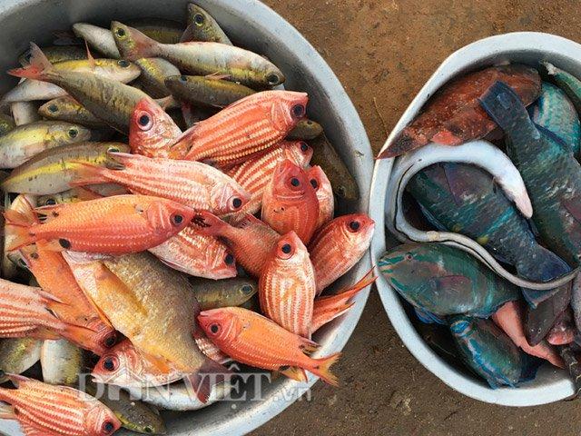Hải sản ngư dân đưa về bán khá phong phú, với đủ loại mực, cá - Hình 5
