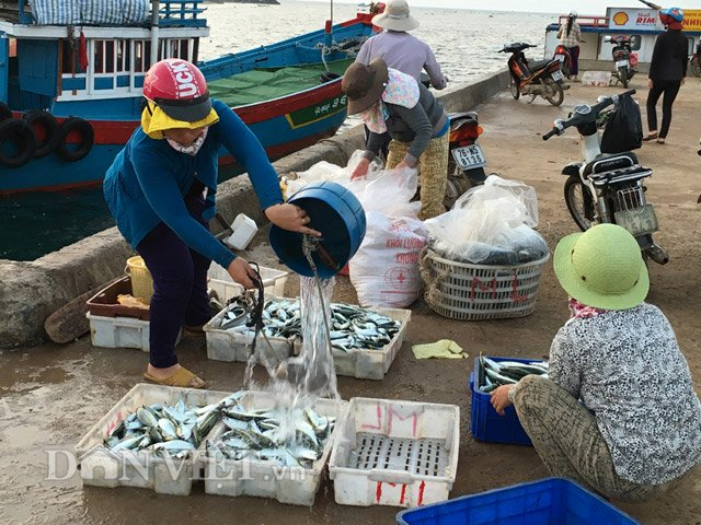 Rửa sơ cá mua để chuẩn bị đưa đi tiêu thụ - Hình 1