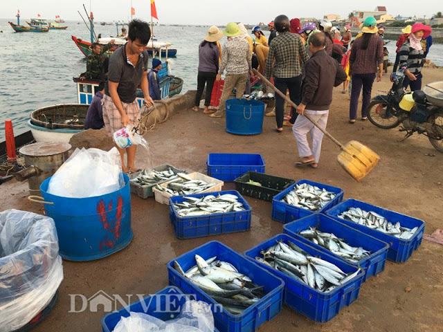 Rửa sơ cá mua để chuẩn bị đưa đi tiêu thụ - Hình 2