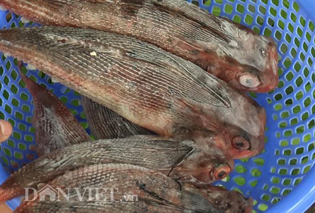 'Gà biển' đắt hàng dịp Tết: Có tiền chưa chắc mua được