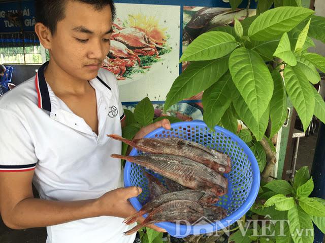 Cá tắc kè trở thành món ngon tại nhiều hàng quán ở Quảng Ngãi