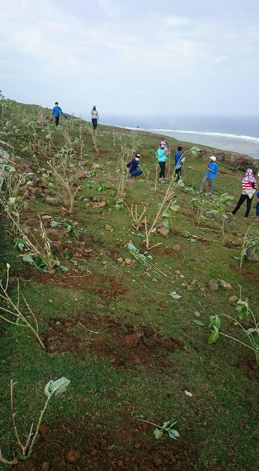 Tuổi trẻ Lý Sơn trồng cây xanh trên đảo - Hình 2
