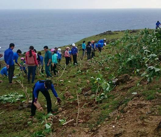 Tuổi trẻ Lý Sơn trồng cây xanh trên đảo - Hình 1