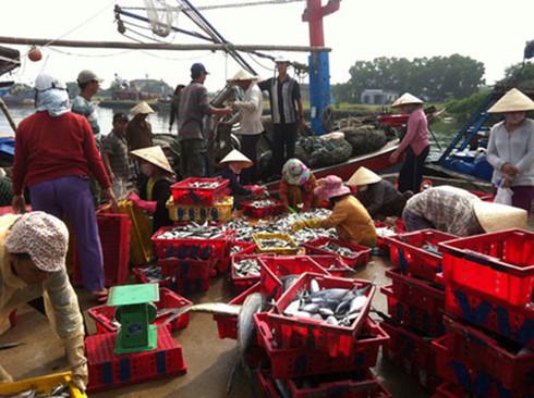 Tờ mờ sáng, cảng cá Lý Sơn đã náo nhiệt người mua, kẻ bán hải sản.