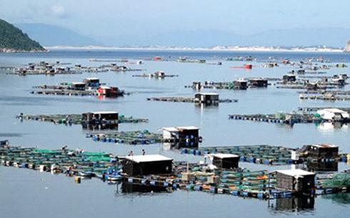 Tình trạng nuôi trồng hải sản tự phát đang diễn ra phổ biến tại ven biển Quảng Ngãi. (Ảnh minh họa: KT)
