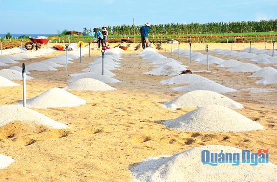 Mỗi năm, ngành nông nghiệp Lý Sơn phải cần đến 50 nghìn khối cát trắng để phục vụ sản xuất hành, tỏi.
