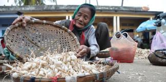 Lượng tỏi khan hiếm khiến giá tỏi Lý Sơn tăng cao kỷ lục