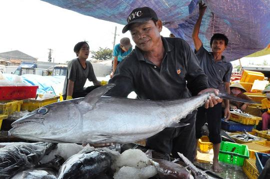Nhiều tàu cá của ngư dân Quảng Ngãi trúng đậm sau những chuyến đi biển dài ngày