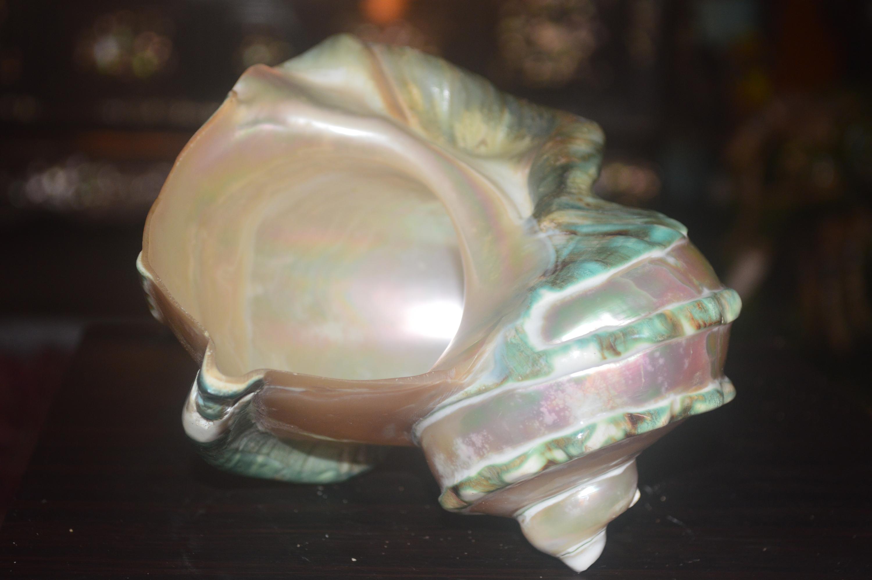 Vỏ ốc xà cừ, chiếc cúp vô địch quốc gia môn lặn sâu năm 1963 và vỏ ốc xác vàng là những kỷ vật mà lão ngư Bùi Thượng luôn nâng niu, giữ gìn